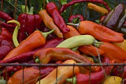 Hot Peppers Prints - Pepper heaven Print by Sue McGlothlin