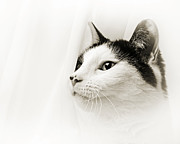 Pepper In The Mist Print by Andee Photography