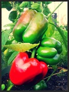 Lee Farley Prints - Peppers 2 Print by Lee Farley