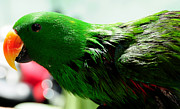 Exotic Bird Photography Framed Prints - Peppi.Green Parrot in his Glory Framed Print by Jenny Rainbow