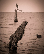 Cypress Stump Photos - Perch by Christy Usilton