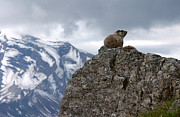 Wild Life Art - Perched Marmot by Gene Tewksbury