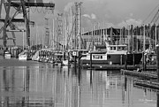 Percival Posters - Percival Landing In Black and White Poster by Jeanette C Landstrom