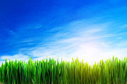 Grow Art - Perfect grass field nature background by Michal Bednarek