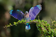 Indigo Prints - Perfect Landing Print by Ashley Vincent