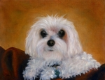 Maltese Dog Posters - Perfect Pup Poster by Kathy Lynn Goldbach