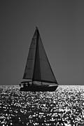Amazing Jules - Perfect Sailing