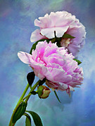 Still Life Photographs Prints - Perfume And Powdery Pastels Print by Theresa Tahara