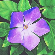 Sophiaart Gallery Framed Prints - Periwinkle Framed Print by SophiaArt Gallery