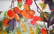 Persimmons Posters - Persimmon Tree Poster by Sarah Bent