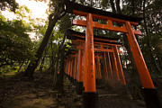 Torii Photos - Person walking in Fushimi Inari by Ruben Vicente