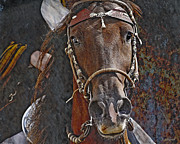 Horse Head Digital Art - Peruvian Power by Judy Wood