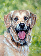 Golden Retriever Art Pastels Prints - PET PORTRAIT A3 16x12 in Golden Retriever Print by Ksenija Mijokovic