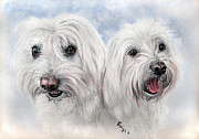 White Dogs Pastels Framed Prints - Pet Portrait A4 12x9 In Maltesers  Framed Print by Ksenija Mijokovic
