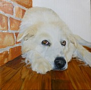 Great Painting Originals - Pet Portrait Great Pyrenees Original Oil Painting on Canvas 10 x 10 inch by Shannon Ivins