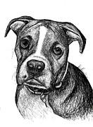 Pet Portraits Boxer Print by Heidi Creed