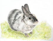 Rabbit Pastels Posters - Pet Rabbit Gray Pastel Poster by Kate Sumners