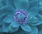To Heal Art - Petal Mandala in Turquoise by Irina Wardas
