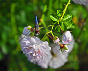 Blue Dragon Fly Posters - Petal Perch Poster by Al Powell Photography USA