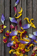 Petals Abstract Print by Svetlana Sewell