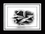 Framing Acrylic Prints - Petals and Shadows 2 Acrylic Print by Kaye Menner