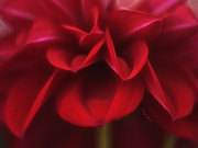 Flower Design Photos - Petals by Cheryl Young