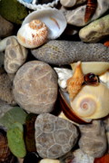 Glass Pebble Prints - Petoskey Stones ll Print by Michelle Calkins