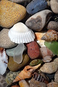 Beach Glass Posters - Petoskey Stones lV Poster by Michelle Calkins