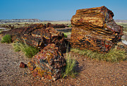 David Hintz - Petrified Forest