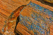 Petrified Forest Logs Print by Nadine and Bob Johnston