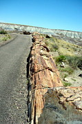 The Petrified Forest Framed Prints - Petrified Log Framed Print by Susan Woodward