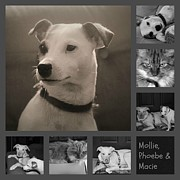 Carolyn Ricks Metal Prints - Pets Collage Metal Print by Carolyn Ricks