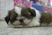 Shihtzu Prints - Pets Not Products Print by Nola Lee Kelsey