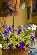 Patricia Hofmeester - Petunia in rusty pot