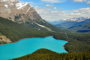 Featured Posters - Peyto Lake Poster by Lisa  Phillips