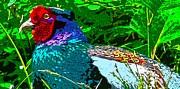 Tim Ernst - Pheasant DigiArtwork