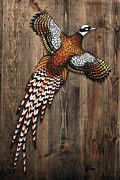 Weathered Mixed Media Originals - Pheasant On Weathered Wood by Wendy Boomhower