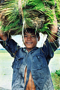 Campesino Framed Prints - Philippine Lad with Rice Shoots Framed Print by Gerald MacLennon