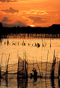 Netting Photo Metal Prints - Philippines Manila Fishing Metal Print by Anonymous