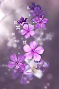 Phlox Digital Art Framed Prints - Phlox and Lilies Framed Print by Judy  Johnson
