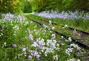 Rural Landscapes Art - Phlox Tracks by Bill  Wakeley