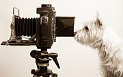 White Dogs Photos - Pho Dog Grapher by Edward Fielding