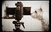 Westies Prints - Pho Dog Grapher - Ground Glass View Print by Edward Fielding