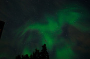 Northernlights Photos - Phoenix Night Light by Derek Coffey