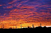 Phoenix Photos - Phoenix Sunrise by Jill Reger