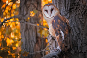 Mike Berenson - Photographing A Barn Owl...