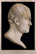 Philosophy Art - Phrenology by Nomad Art And  Design