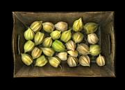 Scanart Framed Prints - Physalis peruviana Framed Print by Christian Slanec