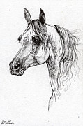 Horse Drawing Posters - Piaff polish arabian horse drawing 1 Poster by Angel  Tarantella