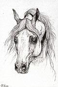Horse Drawings - Piaff polish arabian horse drawing 2 by Angel  Tarantella